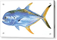 Jack Crevalle Acrylic Print by Carey Chen