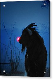 Jacob The Red Nosed Billy Acrylic Print by Matt Taylor