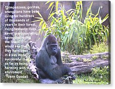 Jane Goodall Gorilla Acrylic Print by Barbara Snyder