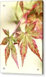 Japanese Maple Acrylic Print by Caitlyn  Grasso