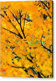 Japanese Maple Leaves Blowing In Wind Acrylic Print by Robert Jensen