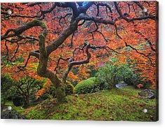 Japanese Maple Tree Acrylic Print by Mark Kiver