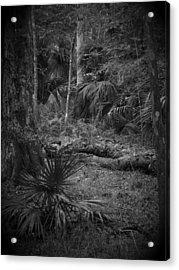 Jb Starkey Number 2 Acrylic Print by Phil Penne