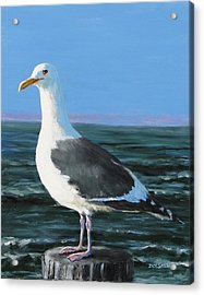 Jeff The Seagull Acrylic Print by Jack Skinner