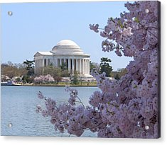 Jefferson Memorial - Cherry Blossoms Acrylic Print by Mike McGlothlen