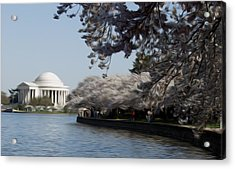Jeffersonian Blossoms Acrylic Print by Kelvin Booker