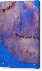 Jellies Acrylic Print by Jack Zulli