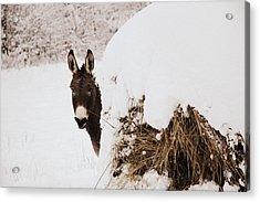 Jenny Acrylic Print by Cheryl Helms