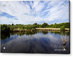Joe Fox Fine Art - Flooded Grasslands And Mangrove Forest In The Acrylic Print by Joe Fox