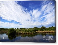 Joe Fox Fine Art - Flooded Grasslands With Mangrove Forest In The Background In The Florida Everglades Us Acrylic Print by Joe Fox