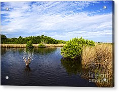 Joe Fox Fine Art - Flooded Grasslands With Mangrove Forest In The Background In The Florida Everglades Usa Acrylic Print by Joe Fox