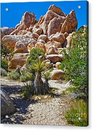 Joshua Tree - 08 Acrylic Print by Gregory Dyer