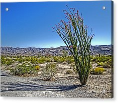 Joshua Tree - 19 Acrylic Print by Gregory Dyer