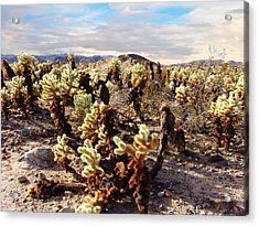 Joshua Tree National Park 3 Acrylic Print by Glenn McCarthy Art and Photography