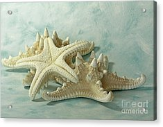 Journey To The Sea Starfish Acrylic Print by Inspired Nature Photography Fine Art Photography