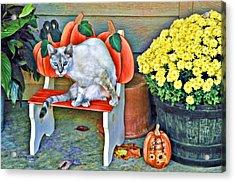 Judy Blue Eyes Acrylic Print by Kenny Francis