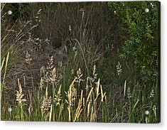 June Grass Acrylic Print by Larry Darnell