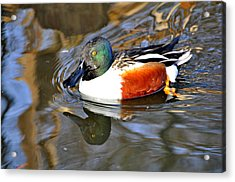 Just Ducky Acrylic Print by Marty Koch