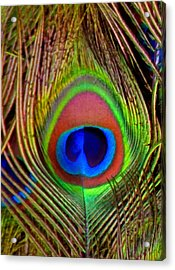 Just One Tail Feather Acrylic Print by Angelina Vick