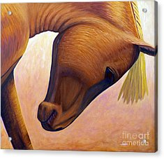 Just Plain Horse Sense Acrylic Print by Brian  Commerford