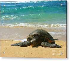 Just Resting Acrylic Print by Christine Stack