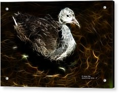 Juvenile Coot 9042 - F Acrylic Print by James Ahn