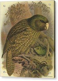 Kakapo Acrylic Print by J G Keulemans