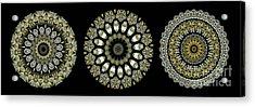 Kaleidoscope Ernst Haeckl Sea Life Series Steampunk Feel Triptyc Acrylic Print by Amy Cicconi