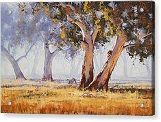 Kangaroo Grazing Acrylic Print by Graham Gercken