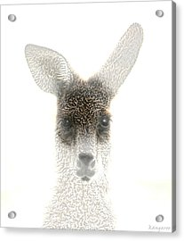 Kangaroo Acrylic Print by Holly Kempe