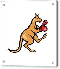 Kangaroo Kick Boxer Boxing Cartoon Acrylic Print by Aloysius Patrimonio