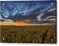 Kansas Color Acrylic Print by Thomas Zimmerman