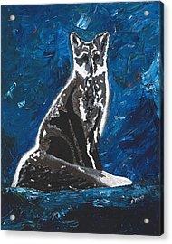 Kat's Fox Acrylic Print by Donna Mann
