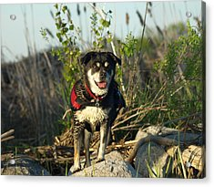 Kayaker's Best Friend Acrylic Print by James Peterson