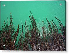 Kelp Off Of Pier At San Simeon State Acrylic Print by Peter Bennett