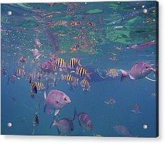 Keys Reef Acrylic Print by Carey Chen