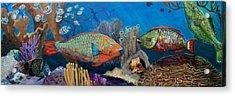 Keys Reef Encounter Acrylic Print by Linda Kegley
