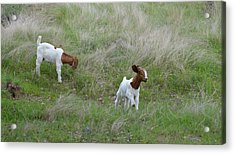 Kids At Play Acrylic Print by Lynn Bauer