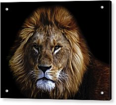 King Of Africa Acrylic Print by Daniel Hagerman