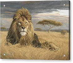 King Of The Pride Acrylic Print by Lucie Bilodeau