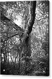 King Of The Timber Bw Acrylic Print by Garren Zanker
