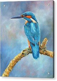 Kingfisher Acrylic Print by David Stribbling