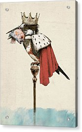 Kingfisher Acrylic Print by Eric Fan