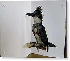 Kingfisher Pop Up Card Acrylic Print by Alfred Ng