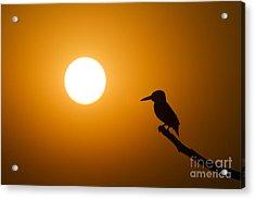 Kingfisher Sunset Acrylic Print by Tim Gainey