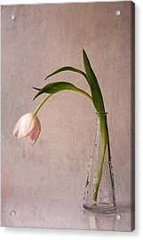 Kiss Of Spring Acrylic Print by Claudia Moeckel