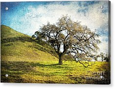 Kiss The Earth Acrylic Print by Ellen Cotton