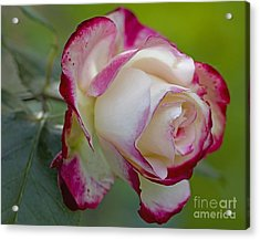 Kissed With Red Acrylic Print by Nick  Boren