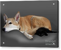 Kitten And Canine Acrylic Print by Linsey Williams