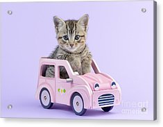 Kitten In Pink Car  Acrylic Print by Greg Cuddiford